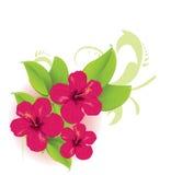 Тропический цветок Стоковые Фото