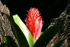Тропический цветок Стоковые Изображения