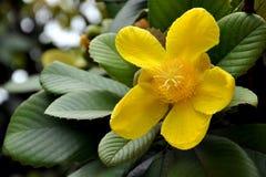 Тропический цветок Стоковые Фотографии RF