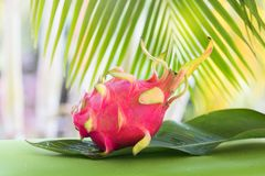 Тропический экзотический плодоовощ дракона pitahya дракона Стоковое Изображение RF