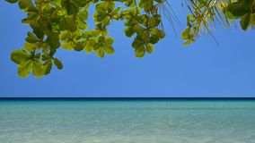 Тропический seascape в UHD видеоматериал