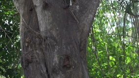 Тропическое дерево джунглей в Юго-Восточной Азии (Таиланде) - 4k сток-видео