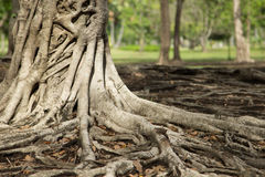 Тропическое дерево Стоковое Изображение