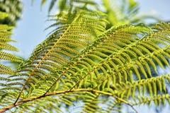 Тропическое изображение листьев, тропическое дерево Стоковое Изображение RF