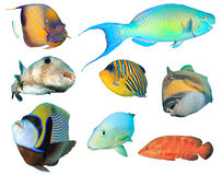 тропическое изолированное рыбами Стоковое фото RF