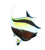 тропическое изолированное рыбами стоковое изображение rf