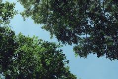 Тропическое назначение леса зеленого цвета treetop стоковое изображение rf