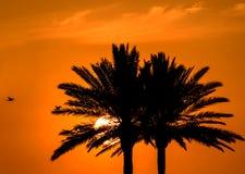 Тропическое небо апельсина захода солнца пальм Стоковые Фотографии RF