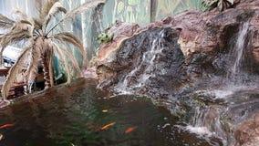 Тропическое оформление Стоковые Изображения