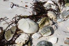 Тропическое печенье моря Стоковые Изображения