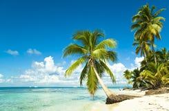 тропическое пляжа идилличное стоковое изображение rf