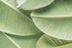 тропическое предпосылки зеленое стоковая фотография