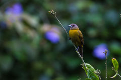 тропическое птицы малое Стоковые Фотографии RF