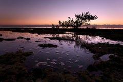 тропическое рассвета спокойное стоковая фотография