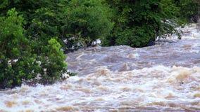 Тропическое река затопляет африканские джунгли, конец-вверх, Экваториальную Гвинею акции видеоматериалы