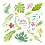 Тропическое собрание цветков листьев Стоковые Фотографии RF