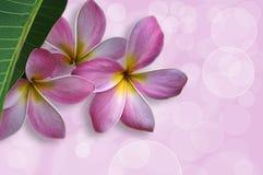 тропическое цветка розовое Стоковое Изображение RF