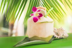 Тропическое экзотическое свежее зеленое питье воды кокоса около ладони с o Стоковое Изображение