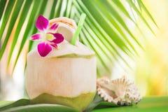 Тропическое экзотическое свежее зеленое питье воды кокоса около ладони с o Стоковое фото RF