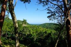 Тропическое Forrest с ладонями Стоковое фото RF