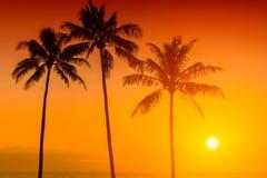 Тропическое susnet Стоковые Фотографии RF