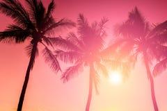 Тропическое susnet Стоковая Фотография RF