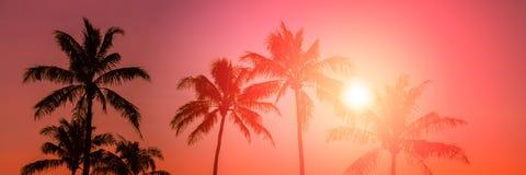Тропическое susnet Стоковое Фото