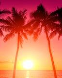 Тропическое susnet Стоковое фото RF