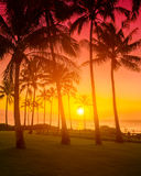 Тропическое susnet Стоковая Фотография