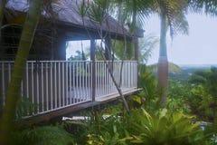 Тропическое vegatation, El Yunque, Пуэрто-Рико Стоковые Фотографии RF