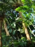 Тропическо стоковое изображение rf