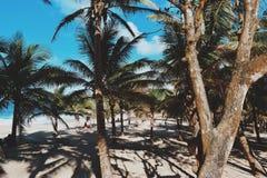 тропическо стоковая фотография
