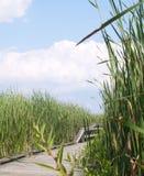 тропка болотоа Стоковые Фотографии RF