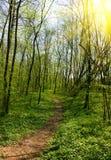 тропка весны парка Стоковое Фото