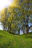 тропка весны парка Стоковая Фотография RF