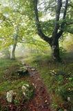 Тропка в лесе Стоковая Фотография RF