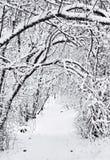 Тропка в зиме стоковое фото rf