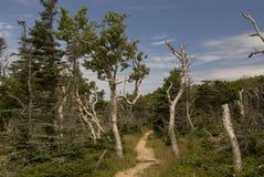 тропка горизонта scotia парка Новы breton гористых местностей плащи-накидк Канады национальная Стоковые Фото