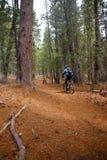 тропка горы пущи conifer велосипедиста Стоковое фото RF
