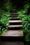 тропка деревянная Стоковое Фото