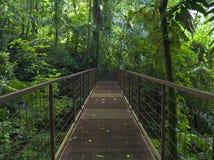 тропка джунглей Стоковое Изображение