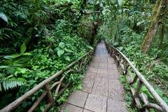 тропка дождевого леса стоковое фото rf