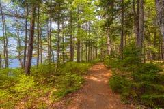Тропка леса Стоковые Изображения