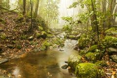 Тропка кедра Стоковая Фотография RF