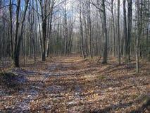 тропка ландшафта пущи Стоковое фото RF