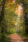 тропка листьев падения Стоковое Изображение