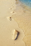 Тропка на пляже Стоковое фото RF