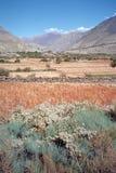 тропка Непала цепи annapurna Стоковое фото RF