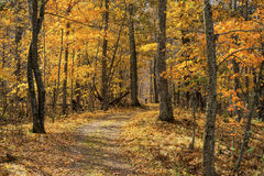 Тропка осени, парк штата kathio стоковое изображение rf