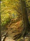 тропка осени Стоковое Фото